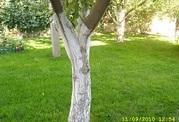 Самый качественный рулонный газон!!!  8-9278-914-525
