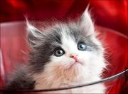 Отдам воспитанных и красивых котяток в хорошие руки