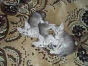 3 ласковых котенка ждут своих любящих хозяев.