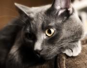 Приглашаем котика на вязку
