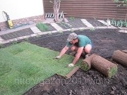 Рулонный газон отличного качества от 85 руб/рул. +7927-777-05-75