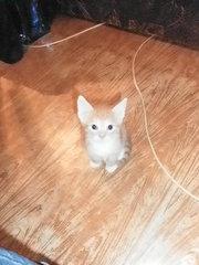 4 замечательных котёнка Ищут новый дом