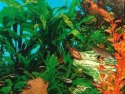 Красивый аквариум (120 л)