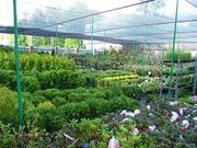 Предлагаем растения оптом и в розницу